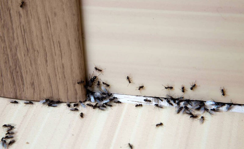 5 Reasons You Have Ants Despite Your House Being Clean