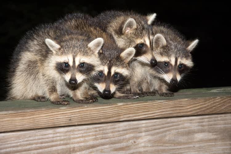 wildlife extermination