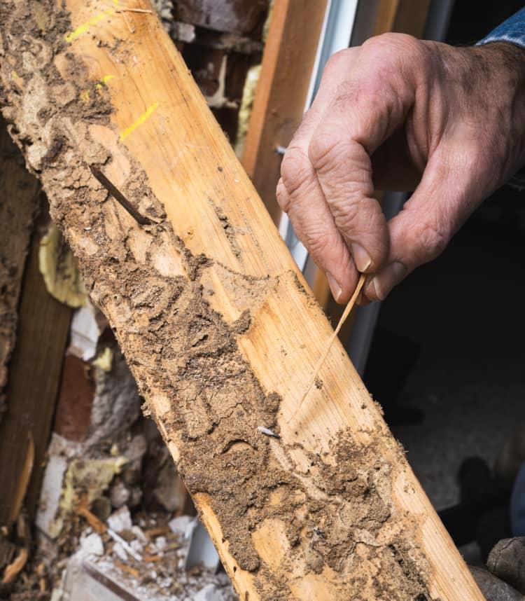St. Louis termite inspection
